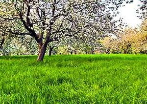 Terraturflandscape Featured1 Lawnmowing