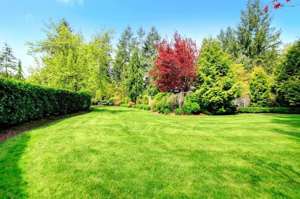 Why Fall Lawn Care Is A Must
