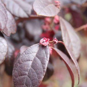 Plant1 (2)