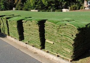 Sod Pic For Blog Page To Replace Pic On New Sod Watering & General Care Tips Post
